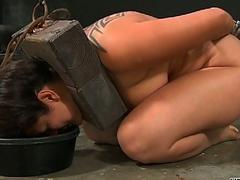 Tormenting babes twat with toy