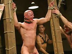 desperate dick-holders locked in cage and punished